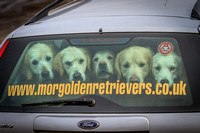 MORGOLDENRETRIEVERS