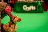 CRUFTS 2018 POINTERS